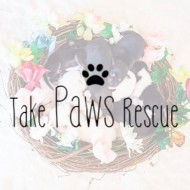 Take Paws Rescue