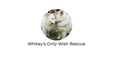 Whitey's Only Wish Rescue