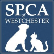 SPCA of Westchester