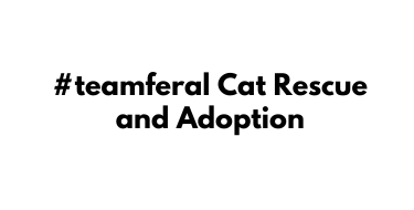 #teamferal Cat Rescue and Adoption