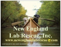 New England Lab Rescue