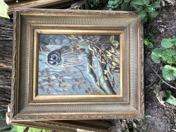 Barred Owl, original oil by *, fabulous wood frame