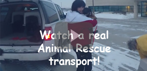 Watch a real Animal Rescue transport!