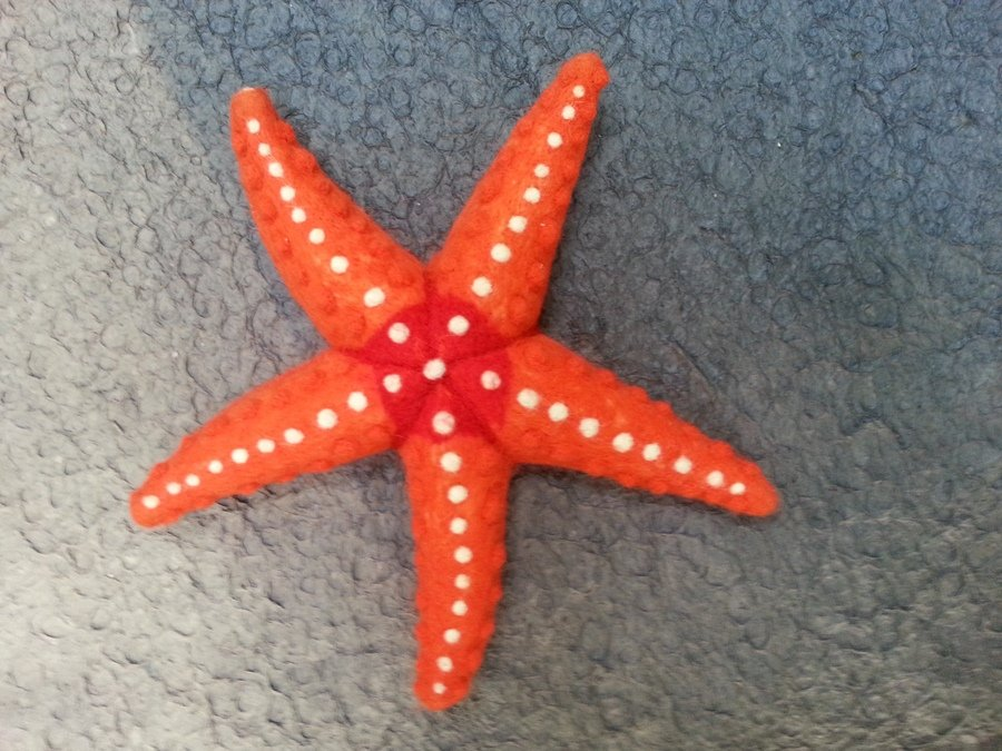save a starfish doobert animal rescue made simple