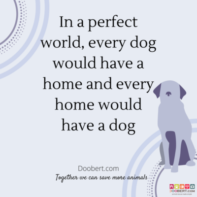 in-a-perfect-world-every-dog-would-have-a-home-and-every-home-would-have-a-dog