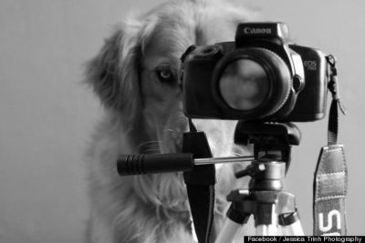 pet-photographer