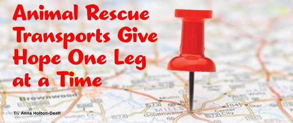 how to get involved in search and rescue