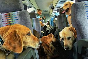 dogs-in-flight