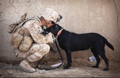 K9 Veterans' Day