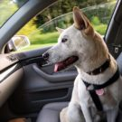 9 Things New Animal Rescue Relay Transporters Need to Know