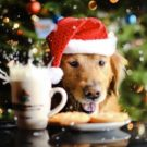 Pet Friendly Holiday Hosting