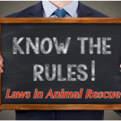3 laws anyone working in animal rescue transport should know