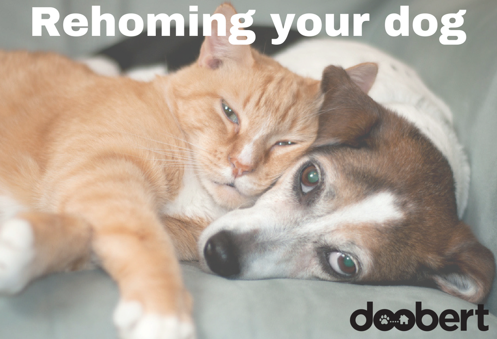 rehoming your dog