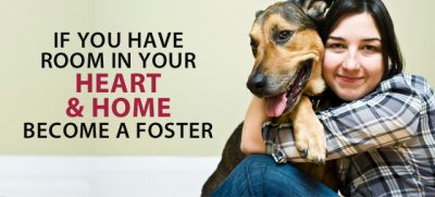 become a foster