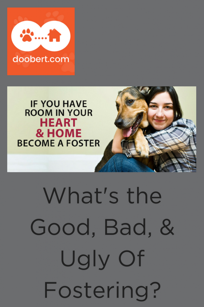 Should you start fostering dogs? (image: woman holding large dog)