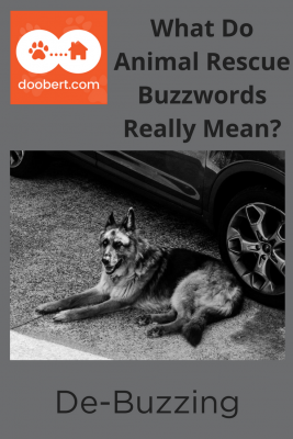 What Do Animal Rescue Buzzwords Really Mean? (image - dog near car)