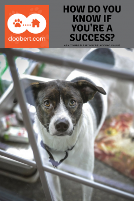 Rescue dog - Ask yourself how you know you're a success?