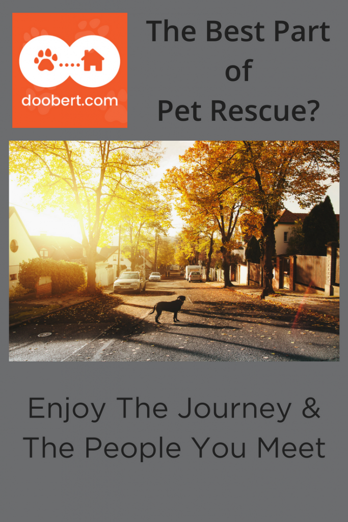 To get the most out of pet rescue, enjoy the journey. (Image - dog on road in sun).