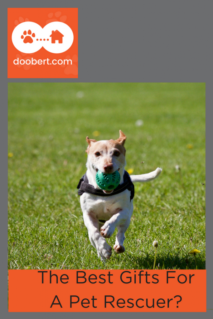 What's the best gift to get a pet rescuer? (image - dog running with ball)