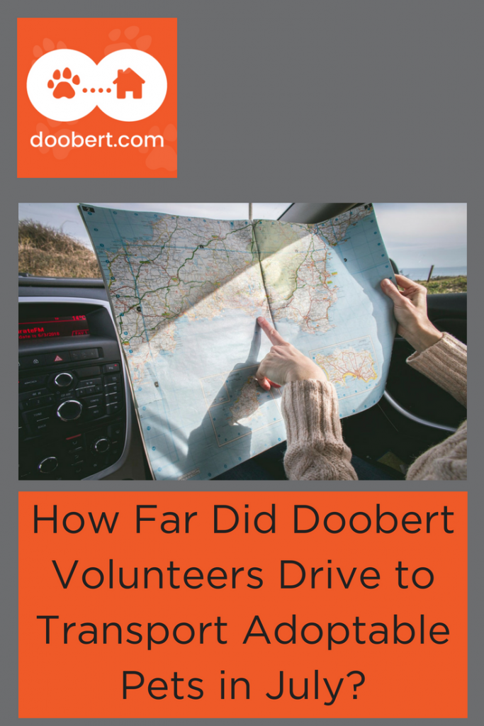 How Far did Doobert volunteers drive in July to transport rescued pets? (image: road map in car)