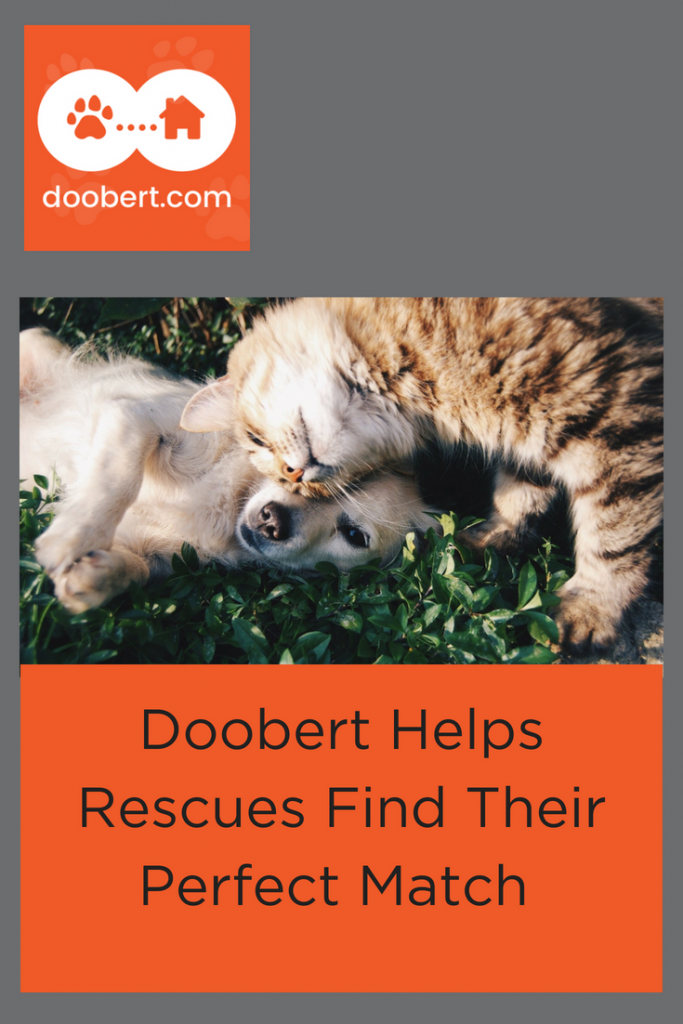 Doobert helps Rescues Find Their Perfect Match - (picture kitten & puppy)