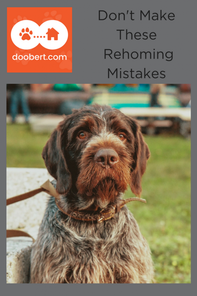 Are you making these rehoming mistakes? (Image - sad brown dog)