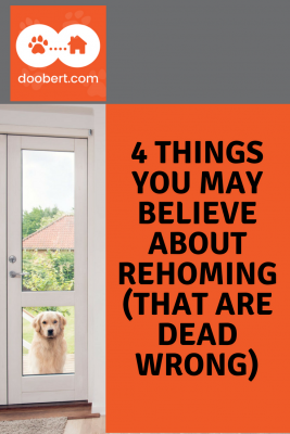 4 Misconceptions about Rehoming Pets - (image - dog looking in door)