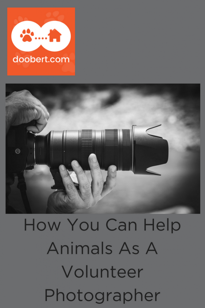 Learn how you can help animals by volunteering as a photographer. (image: large camera lens)