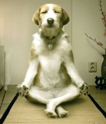 dog doing yoga