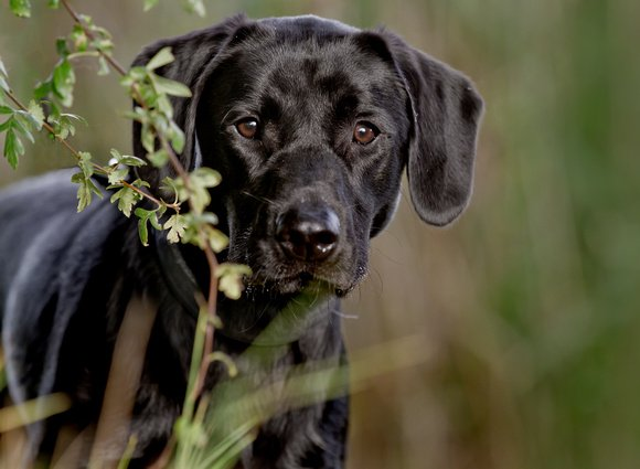 photograph of black dog