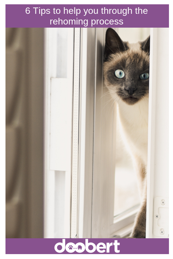 Tips for rehoming your pet