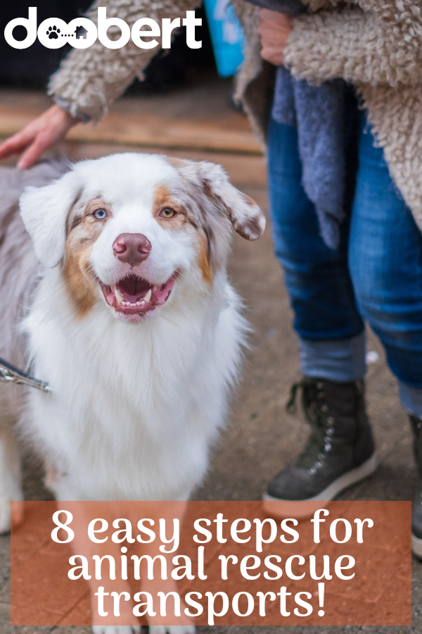 8 easy steps for animal rescue transports