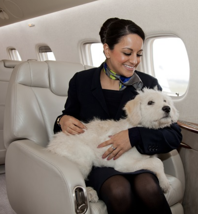 flight attendant with dog