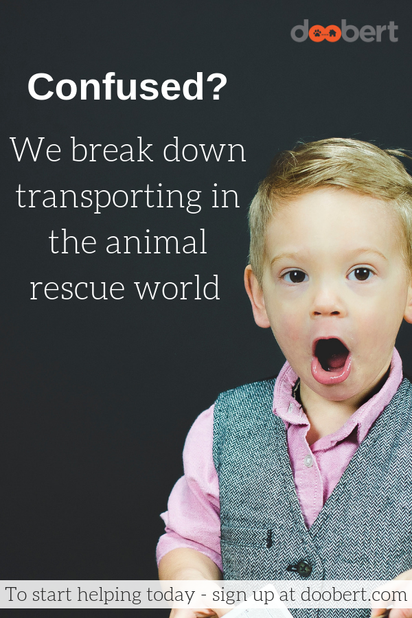What the heck is animal rescue transporting_