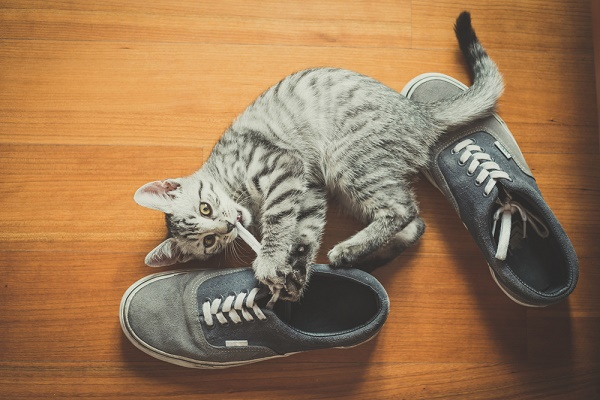 cat playing with shoes