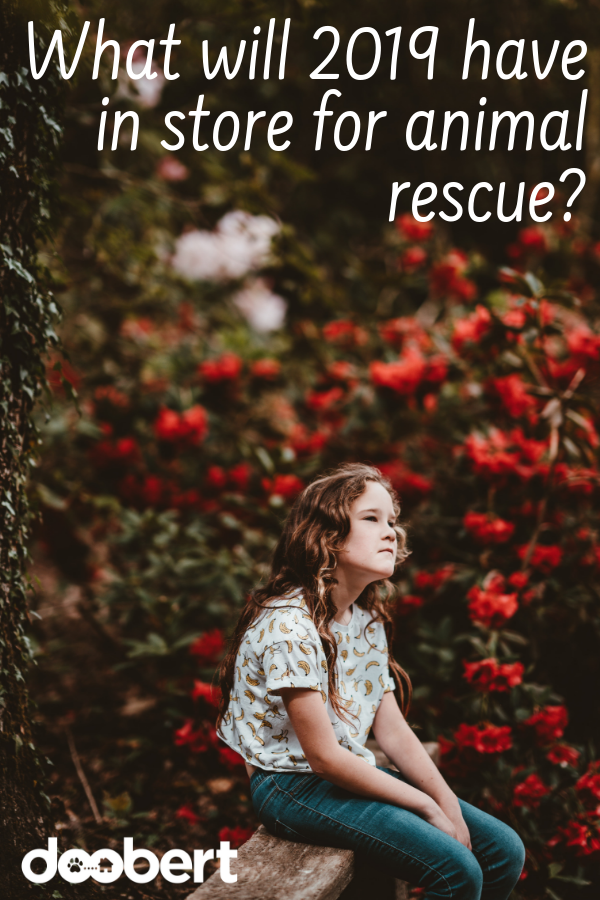 What will 2019 have in store for animal rescue_