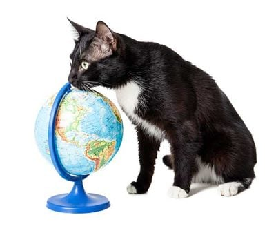 global travel with pets