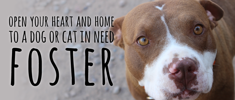 foster an animal