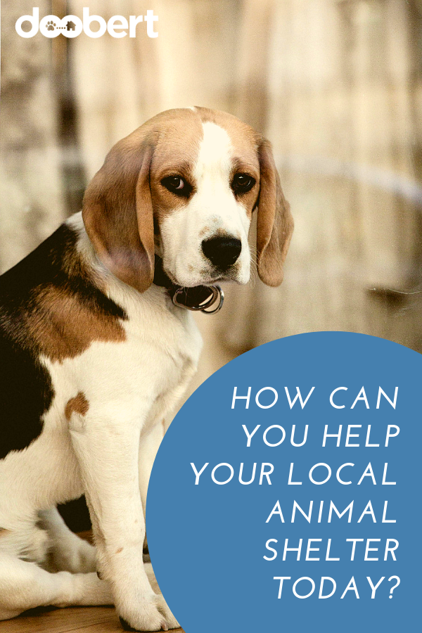 How can you help your local animal shelter today_