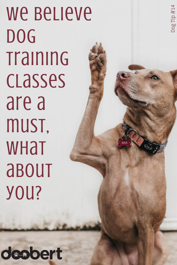 We believe dog training classes are a must, what about you_