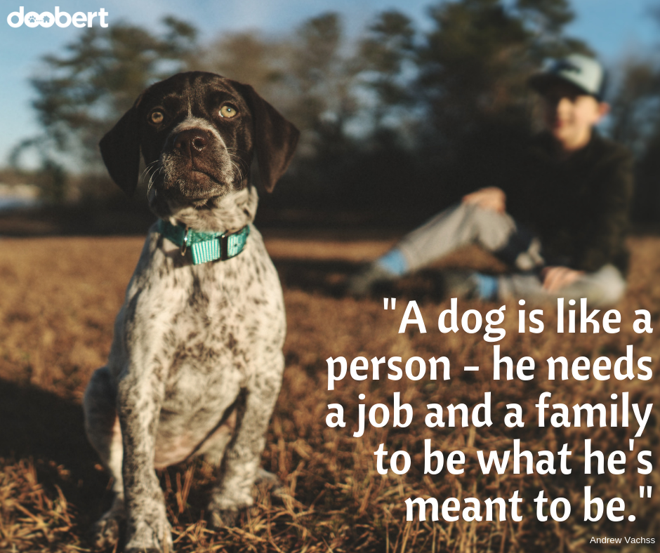 A dog is like a person - he needs a job and a family to be what he's meant to be._ (1)