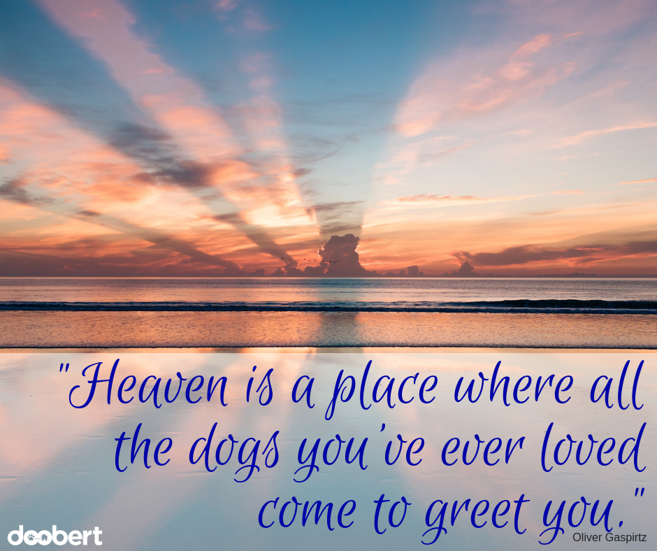 Heaven is a place where all the dogs you've ever loved come to greet you.