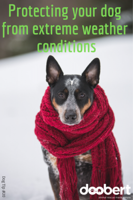 Protecting your dog from extreme weather conditions