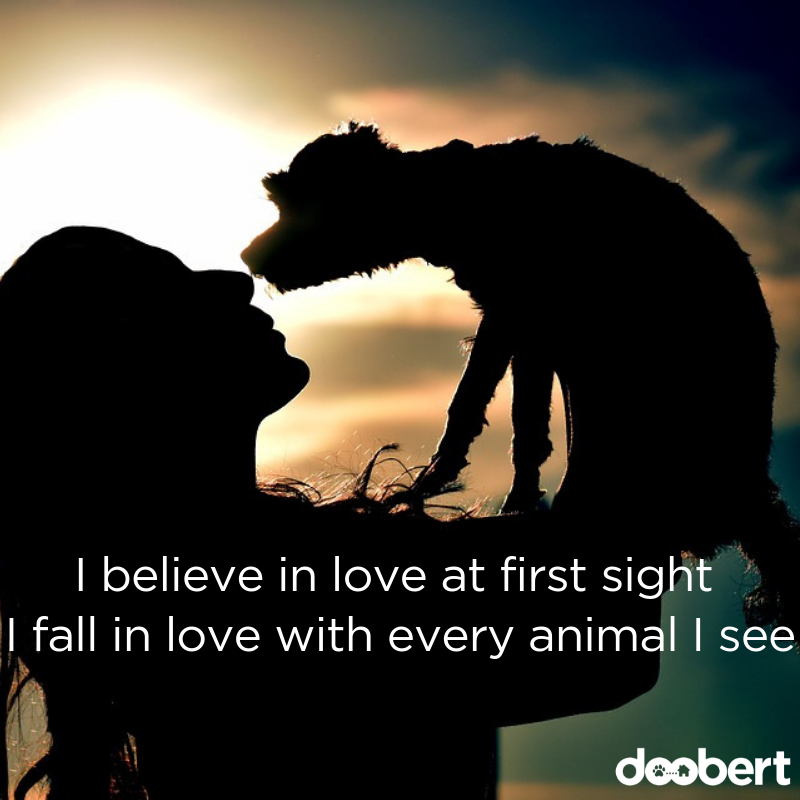 I believe in love at first sight. I fall in love with every animal I see