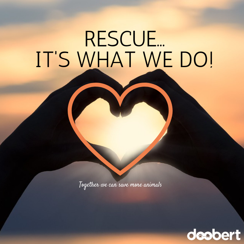 Rescue - It's what we do