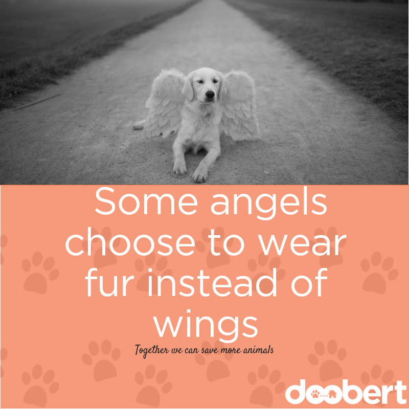 Some angels choose to wear fur instead of wings