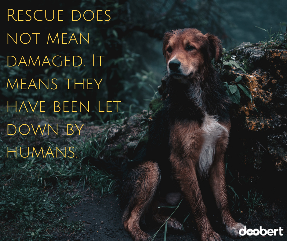 Rescue does not mean damaged. It means they have been let down by humans. (1)
