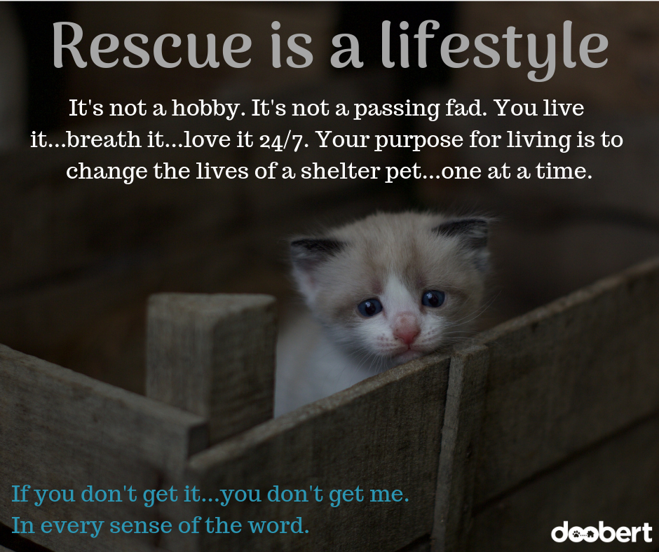Animal Rescue is a lifestyle...