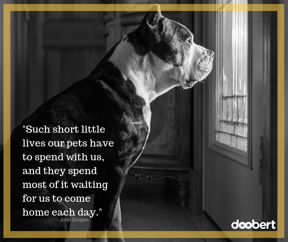 Such short little lives our pets have to spend with us, and they spend most of it waiting for us to come home each day.