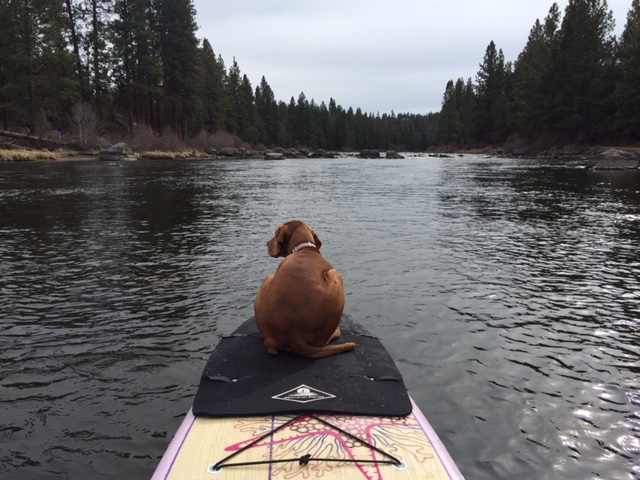 dog-paddle-board